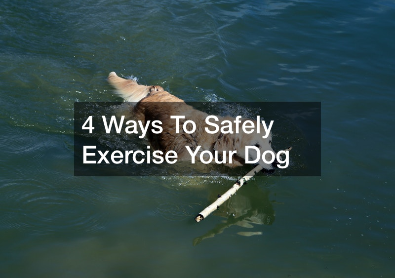 recommended exercise for dogs
